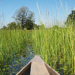 Die Vorderseite eines kleinen Bootes, das einen Fluss mit viel hohem Gras hinunterfährt