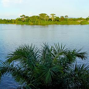 Ogowe Fluss mit Pflanzen und Bäumen