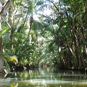 Ein Fluss. An den Seiten ist ein tropischer Urwald zu sehen.