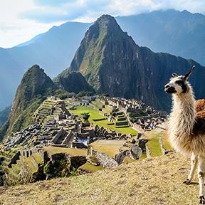 Lama und Machu Picchu
