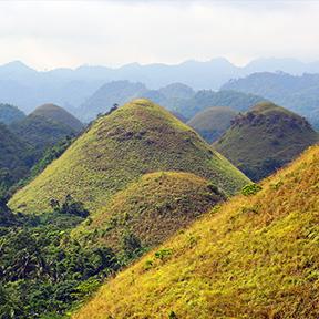 Chocolate Hills. Gelbe und grüne Hügel, die sich in die Ferne erstrecken.