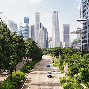 Eine Straße führt in die Stadt nach Singapur. Zwischen den Bäumen sind Hochhäuser zu sehen.
