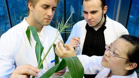 Drei Forscher schauen sich eine Pflanze an - PPP