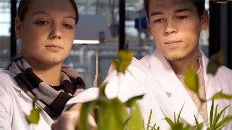 Zwei Menschen in weißen Kitteln begutachten Pflanzen in einem Labor. - CoCiBio